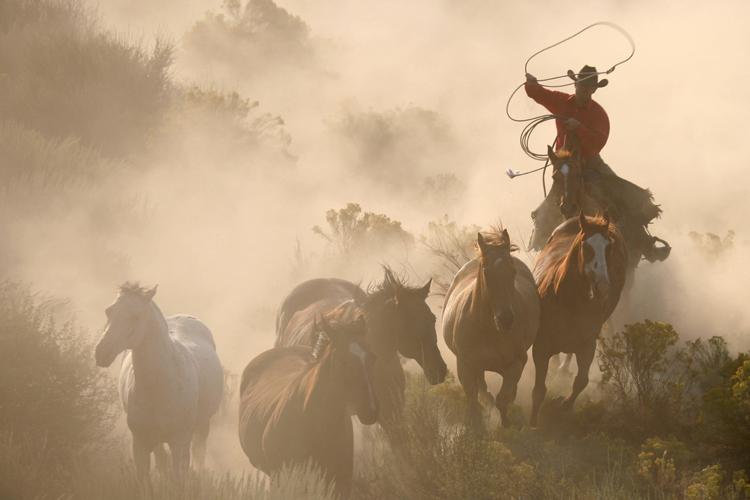 harpers-trail-winery-branding-cowboy.jpg