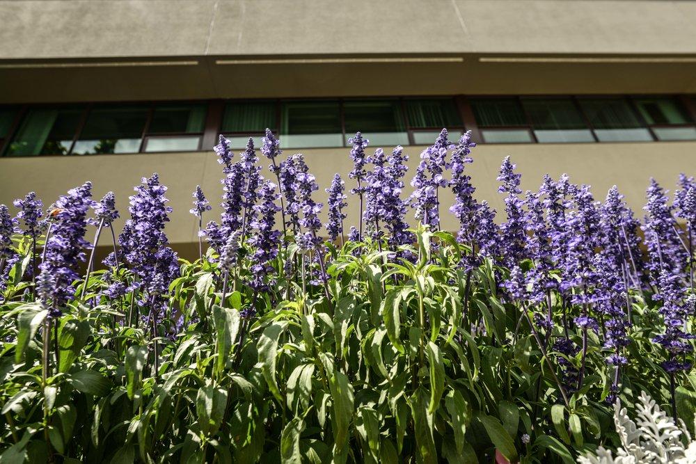 Aberdeen Place 45.jpg