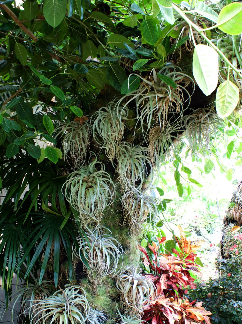 air plants - botanical gardens conservatory