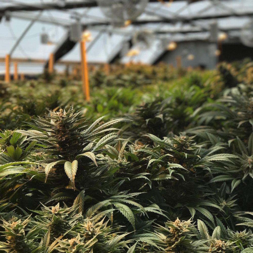 greenhouse.jpeg