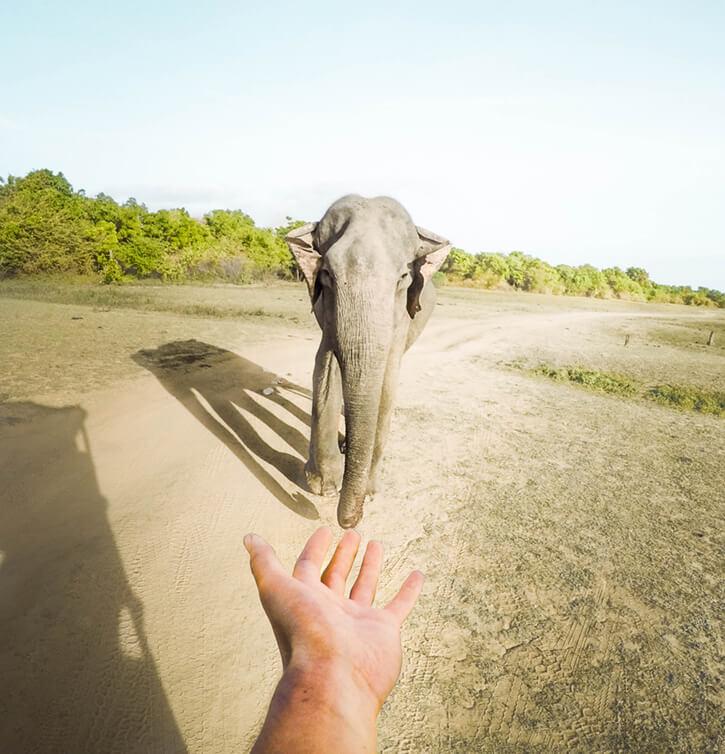 Udawalawe Safari 2.JPG