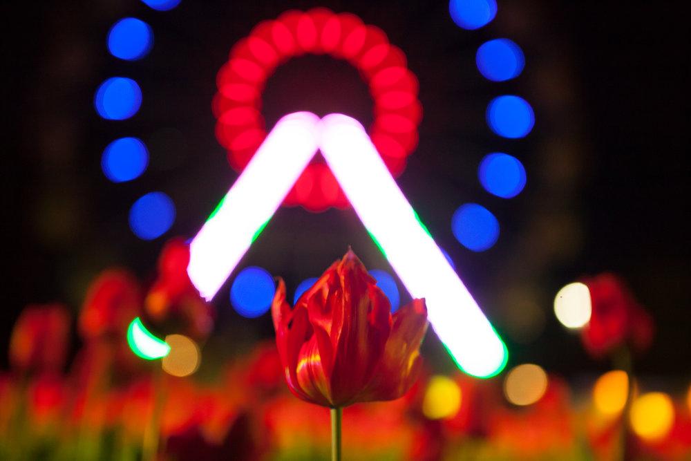 Floriade's Night Fest