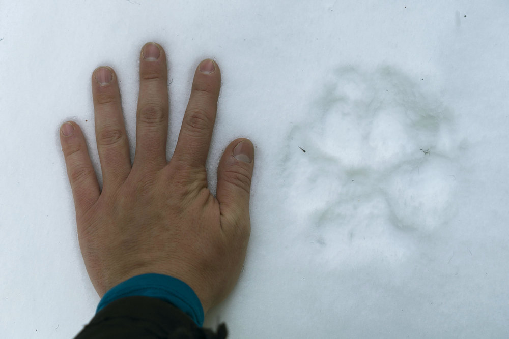Tracking Wildlife in Banff National Park -