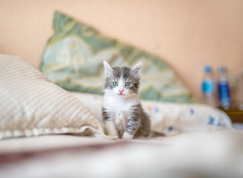 Kitten -kote-puerto-771605-unsplash.jpg