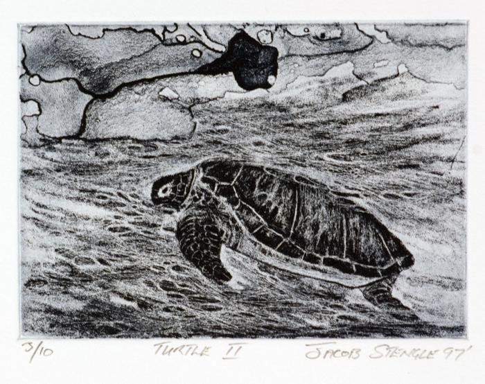 Turtle II