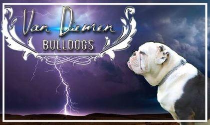 Van Dieman Aussie Bulldogs - Please contact: KareneMail: karen.groves@hotmail.comFacebook