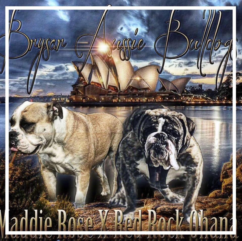 Brysar Aussie Bulldogs - Please contact: Bryson or SaraheMail: brysaraussiebulldogs@gmail.comwww.brysaraussiebulldogs.com.au