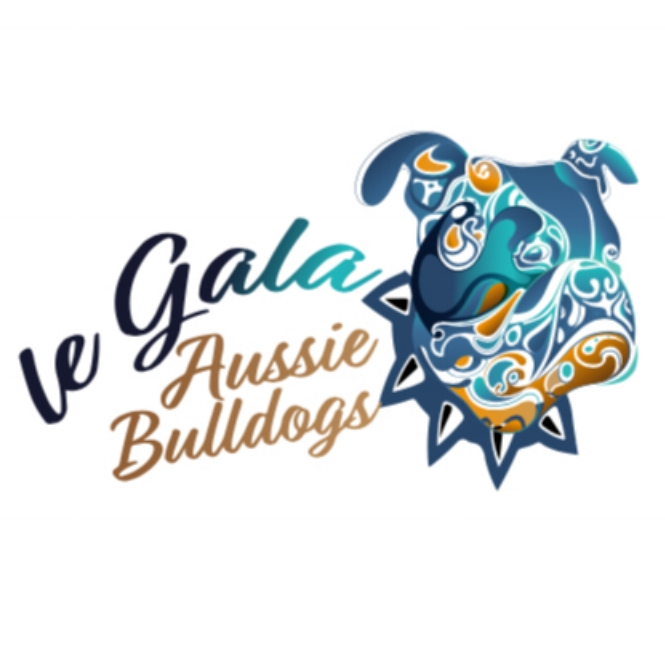 le Gala Aussie Bulldogs - Located: HobartPlease contact: AimeePhone: 0428 906 969eMail: aimeegaggi@gmail.com