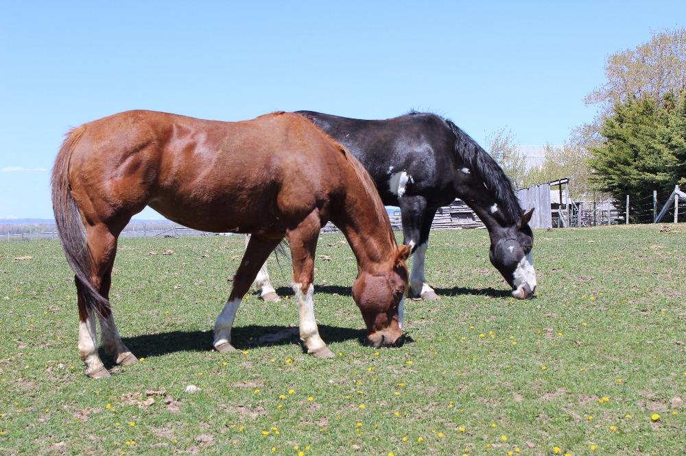 teton-valley-horses.jpg