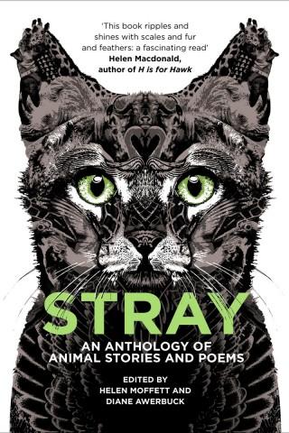 Stray-cover3-320x480.jpg