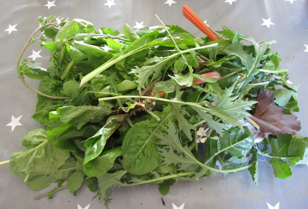 Salad leaves from the veggie patch. Fed by my compost, so a cycle…