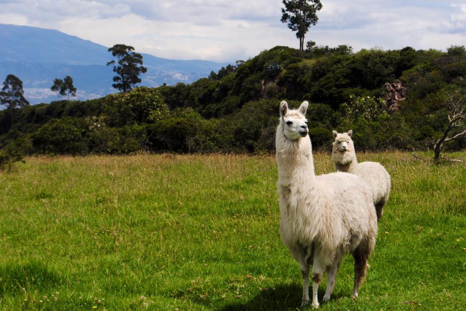 Andean posture