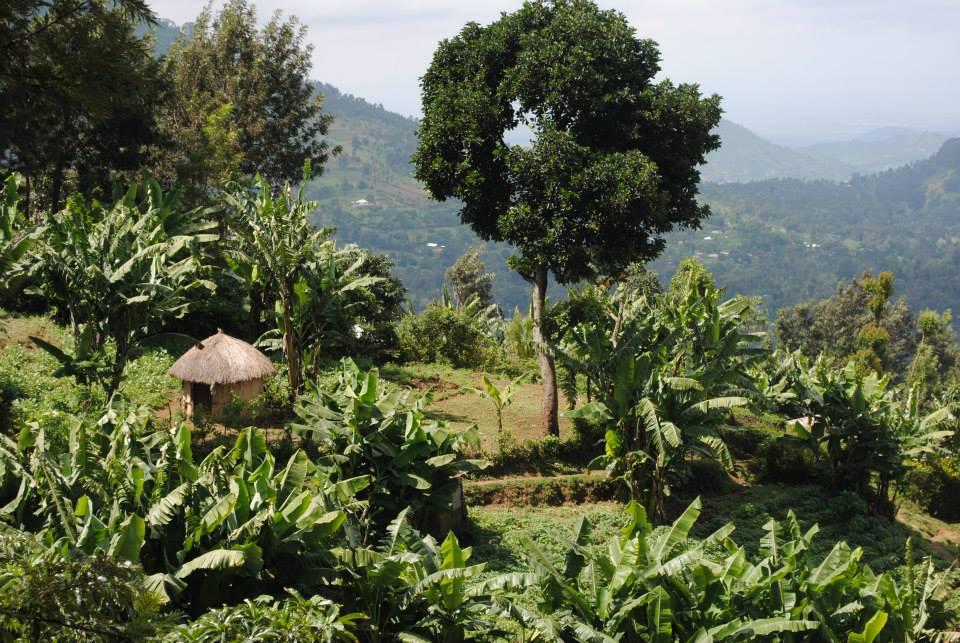Tanzanian Foothills
