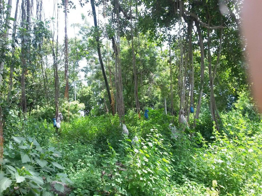 NAGUAL FOREST jpg.jpg