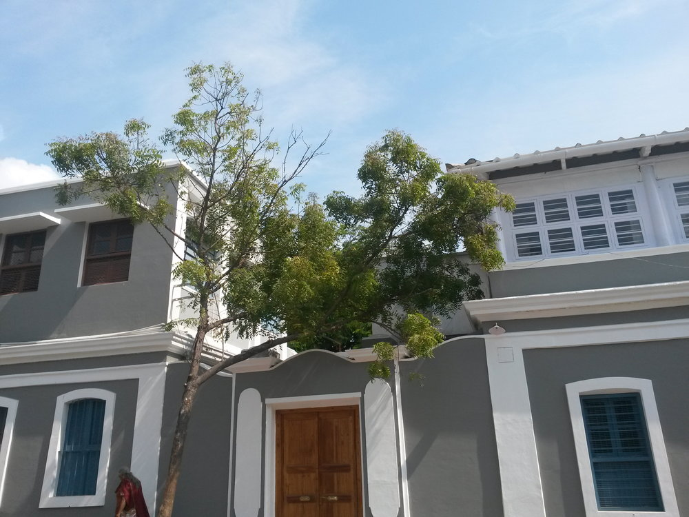 SAMADHI SERVICE TREE .jpg