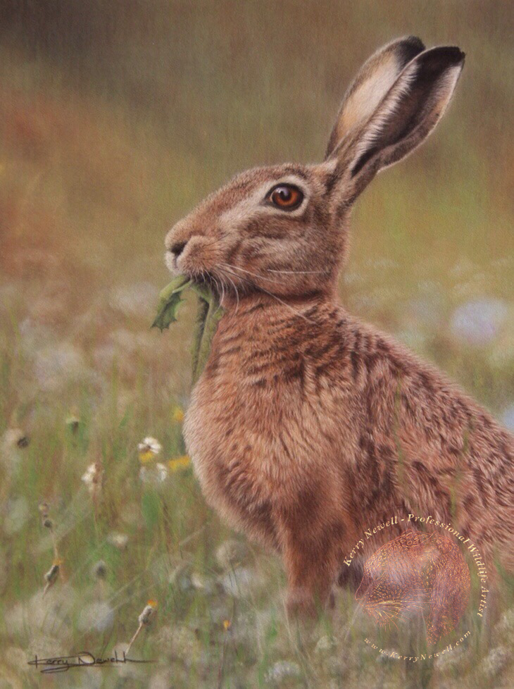 EUROPEAN HARE WATERMARKED copy.jpg