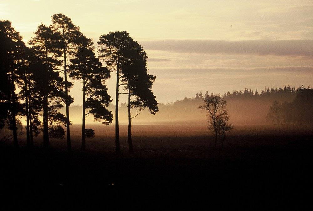 new forest 020-1.jpg