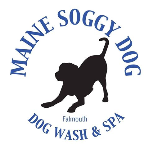 Maine Soggy Dog