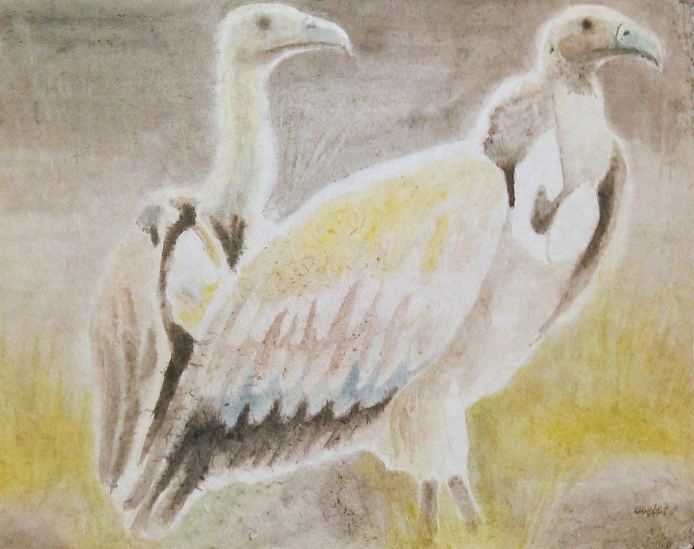 Gänsergeier in Erwartung / Griffon Vulture in Expectation