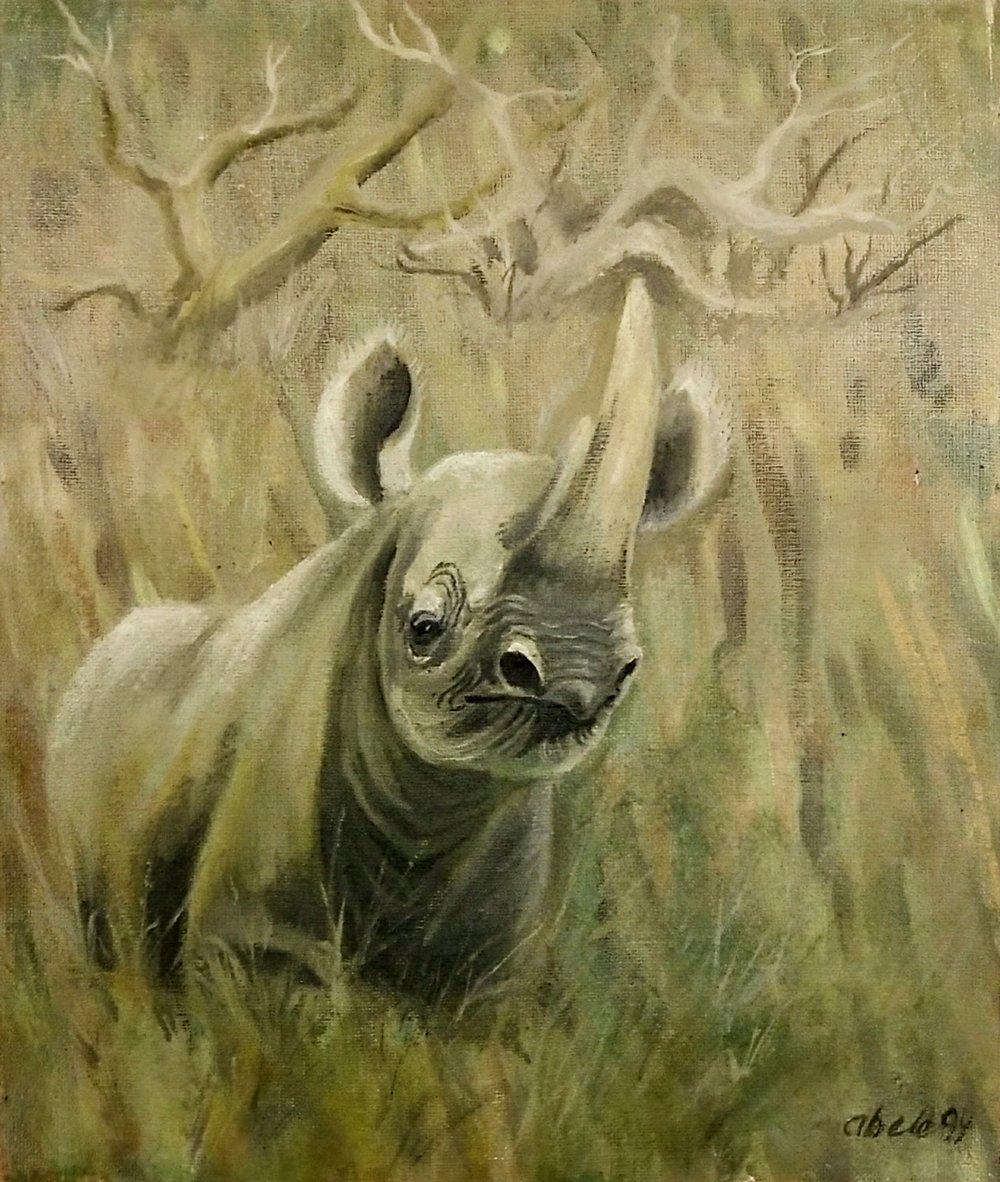 Spitzmaulnashorn horscht auf jedes Geräusch / Black Rhino Hears Every Sound