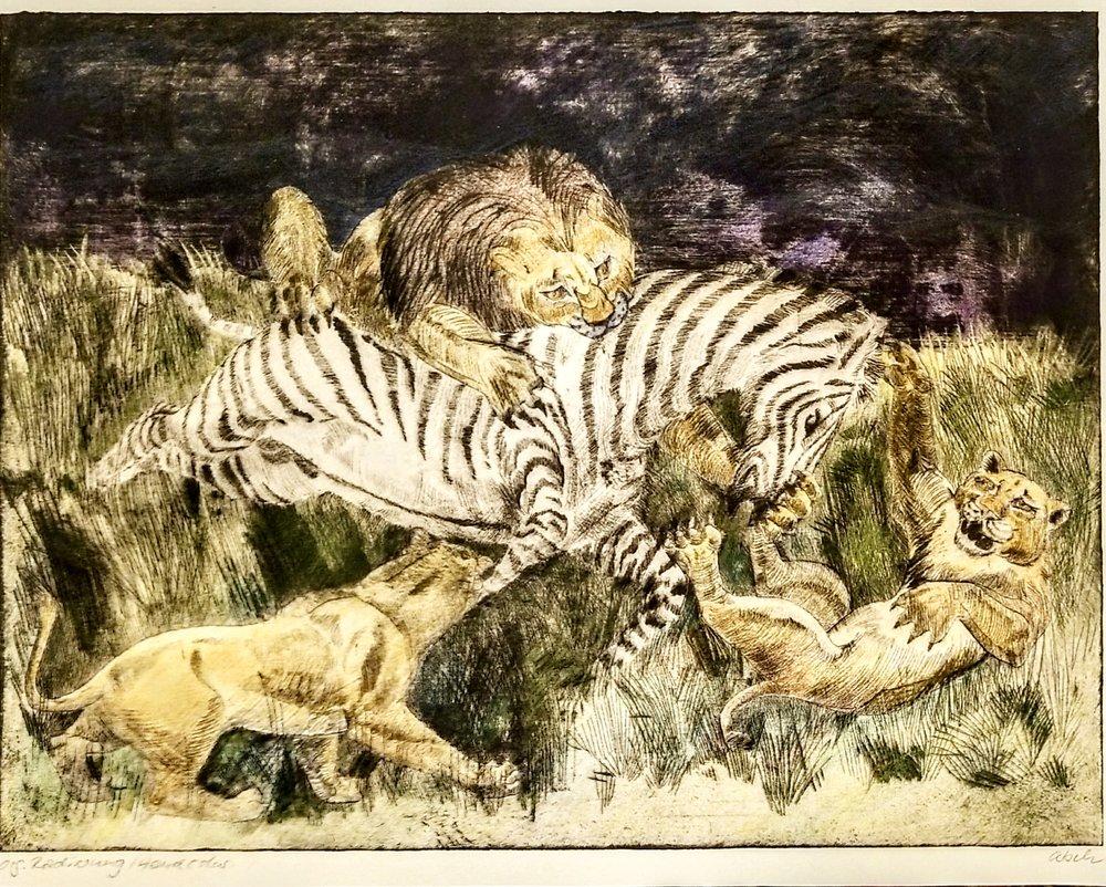 Zebrahengst kämpft um sein Leben in der Morgenfrühe / Zebra Stallion Fights for His Life in the Early Morning