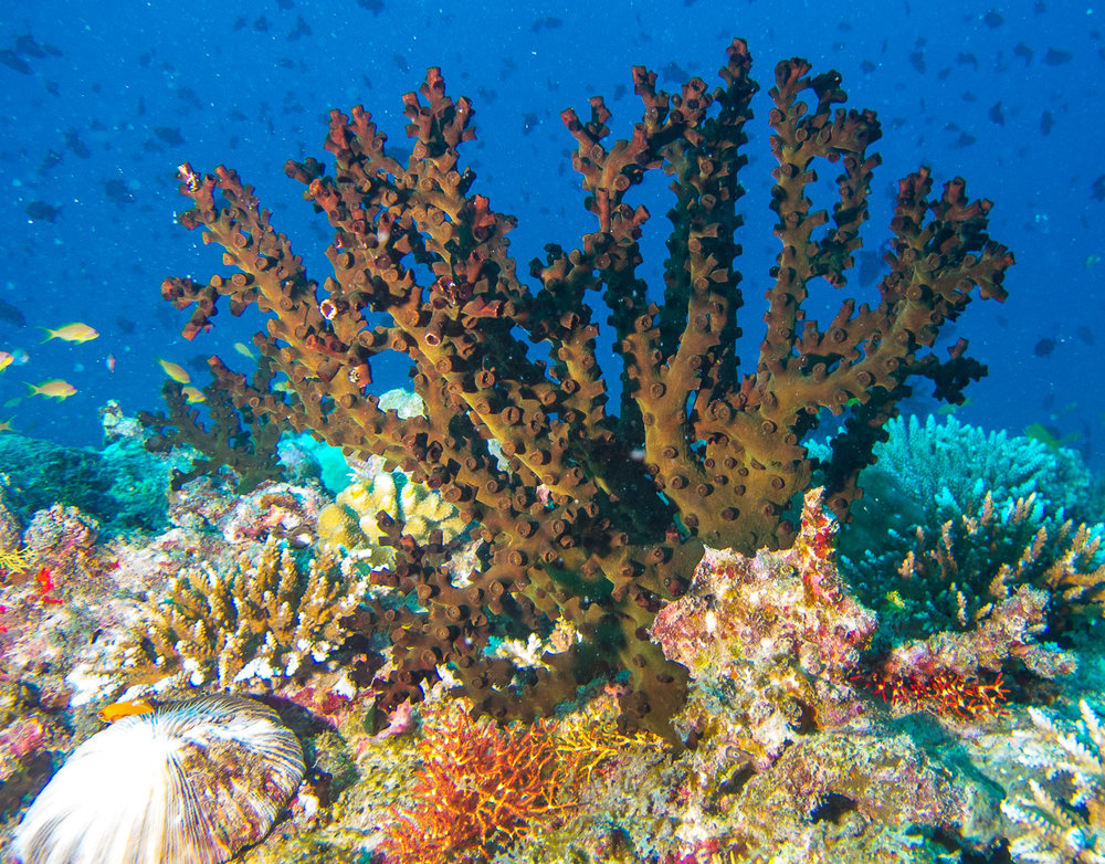 Protecting the Coral reef on Maziwe Island. -