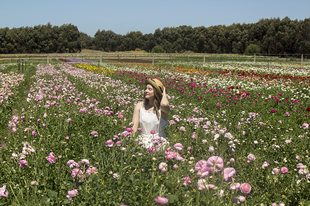 Pick Your Own Flowers at Mannerim Flower Farm