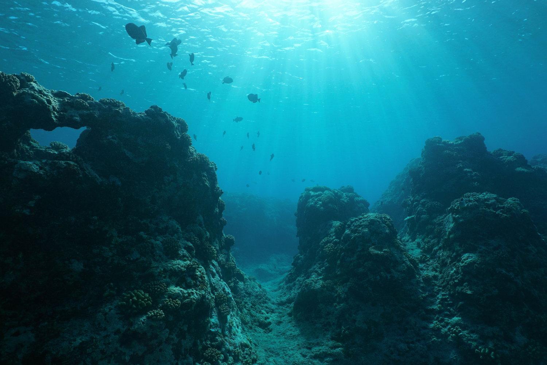 Live Underwater Cameras