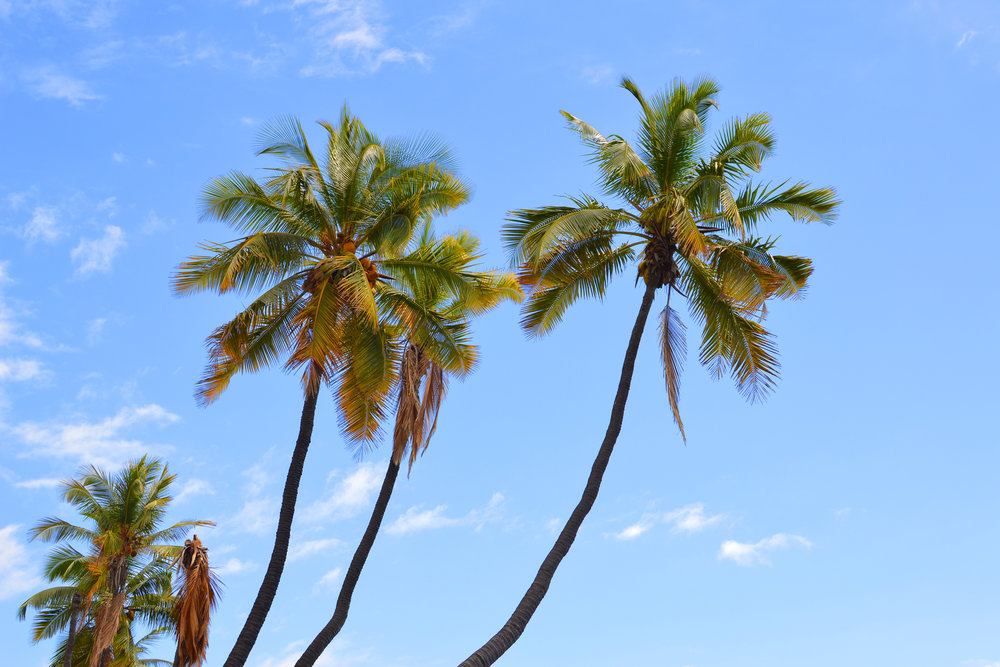 palms2-3.jpg