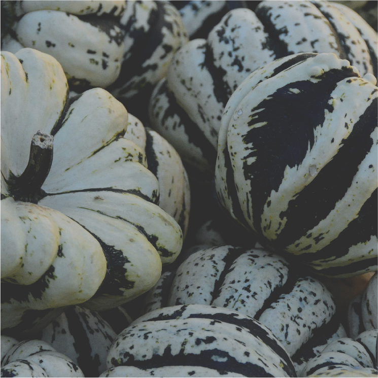 gourds-05.png