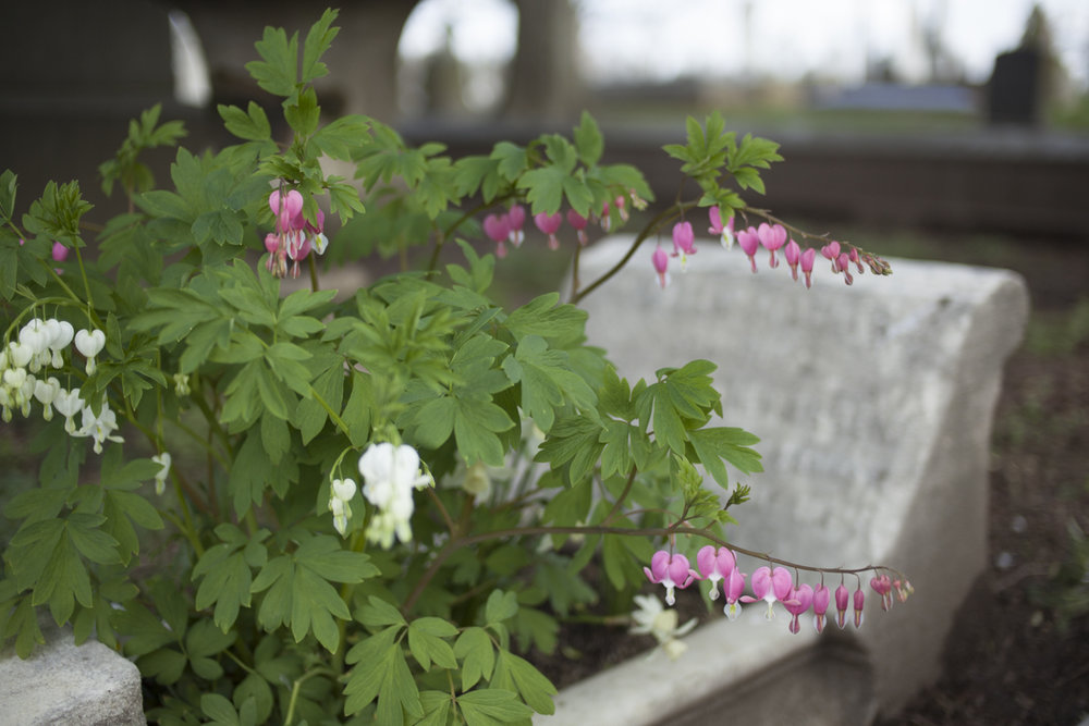 Grave Gardeners-0496.jpg