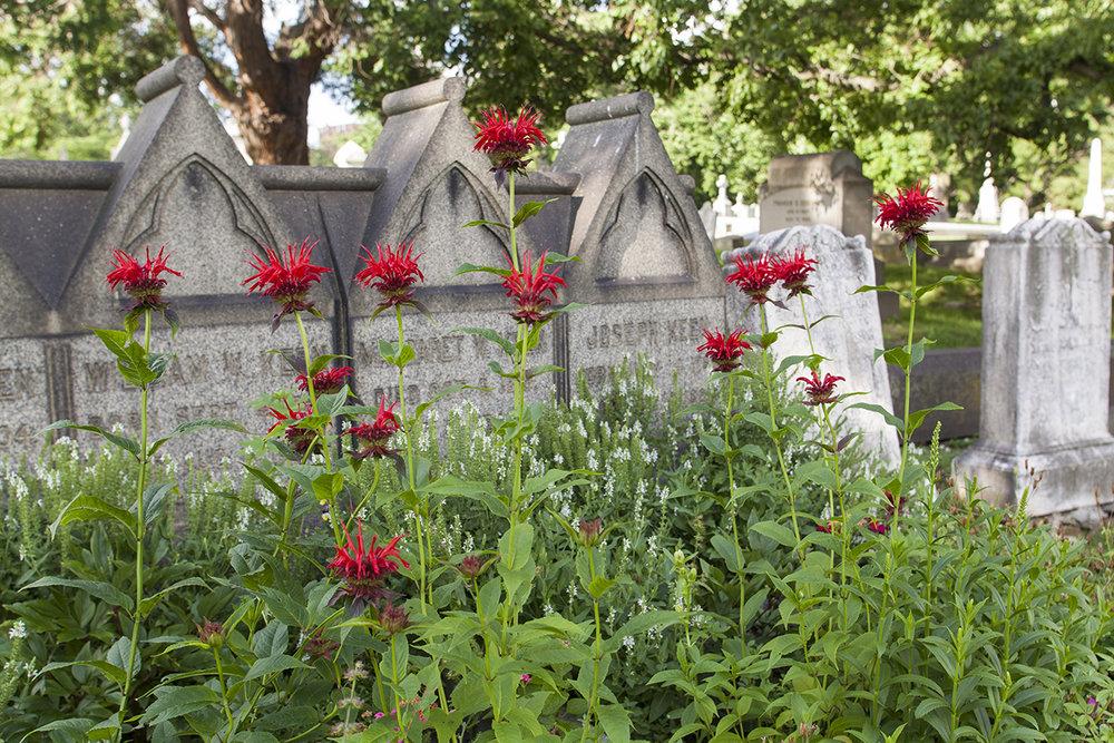 grave gardens-0692.jpg