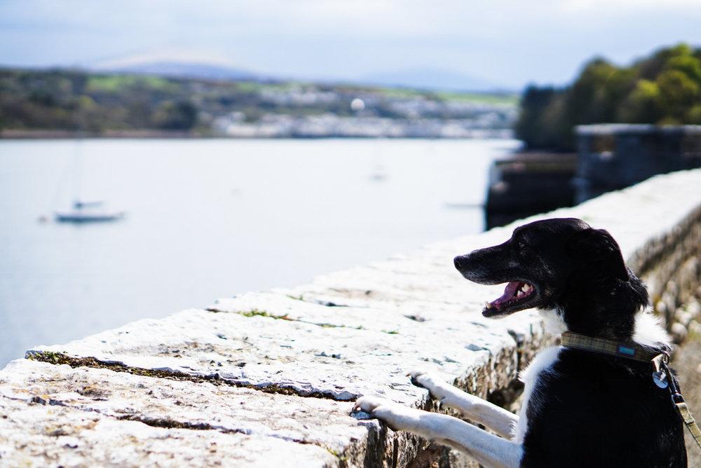 Milo admiring the view