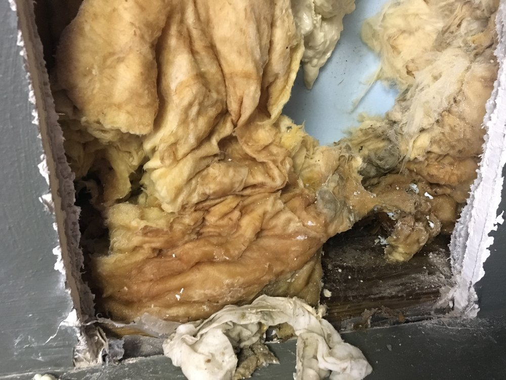 Mold Damage 2.JPG