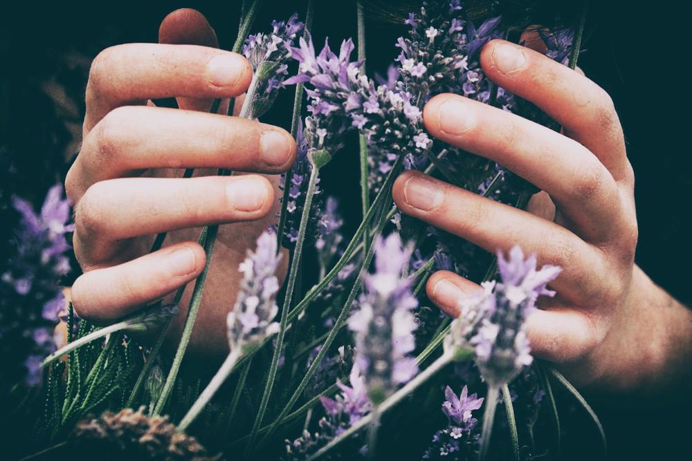 LIVER LOVE | Healing Herbs