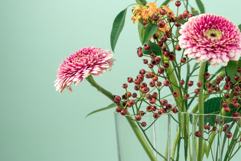 HORMONE SERIES: Herbal Remedies for Acne