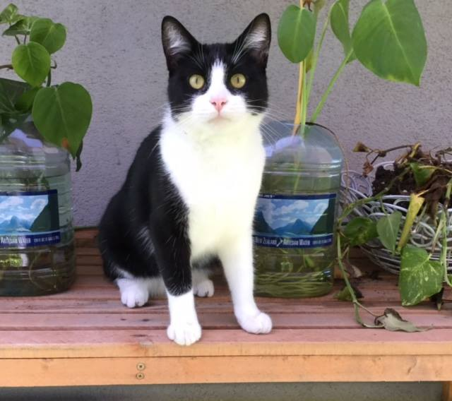 Marlene - cat.jpg