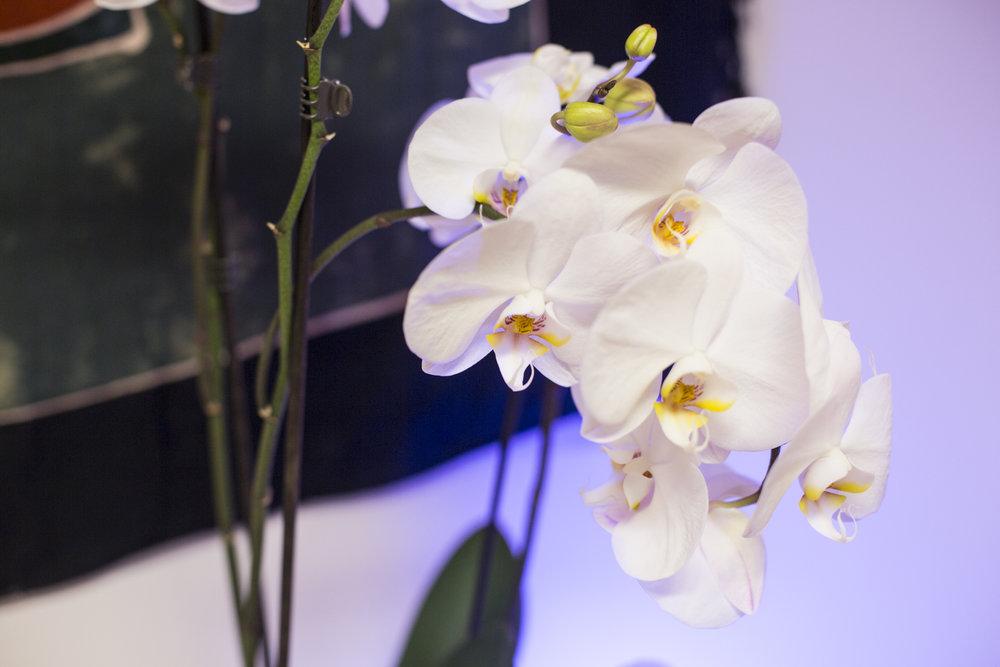 The happy body flowers