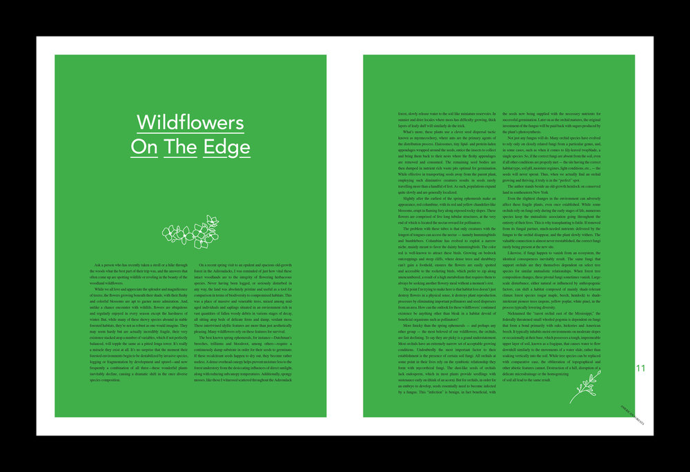 American Forests Redesign comps-6.jpg