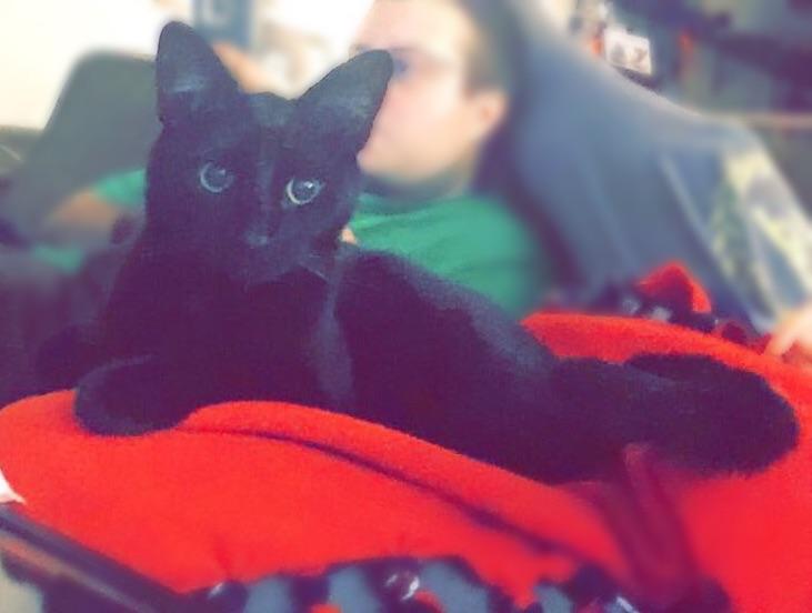 Kiwi comfy at home, where he belongs