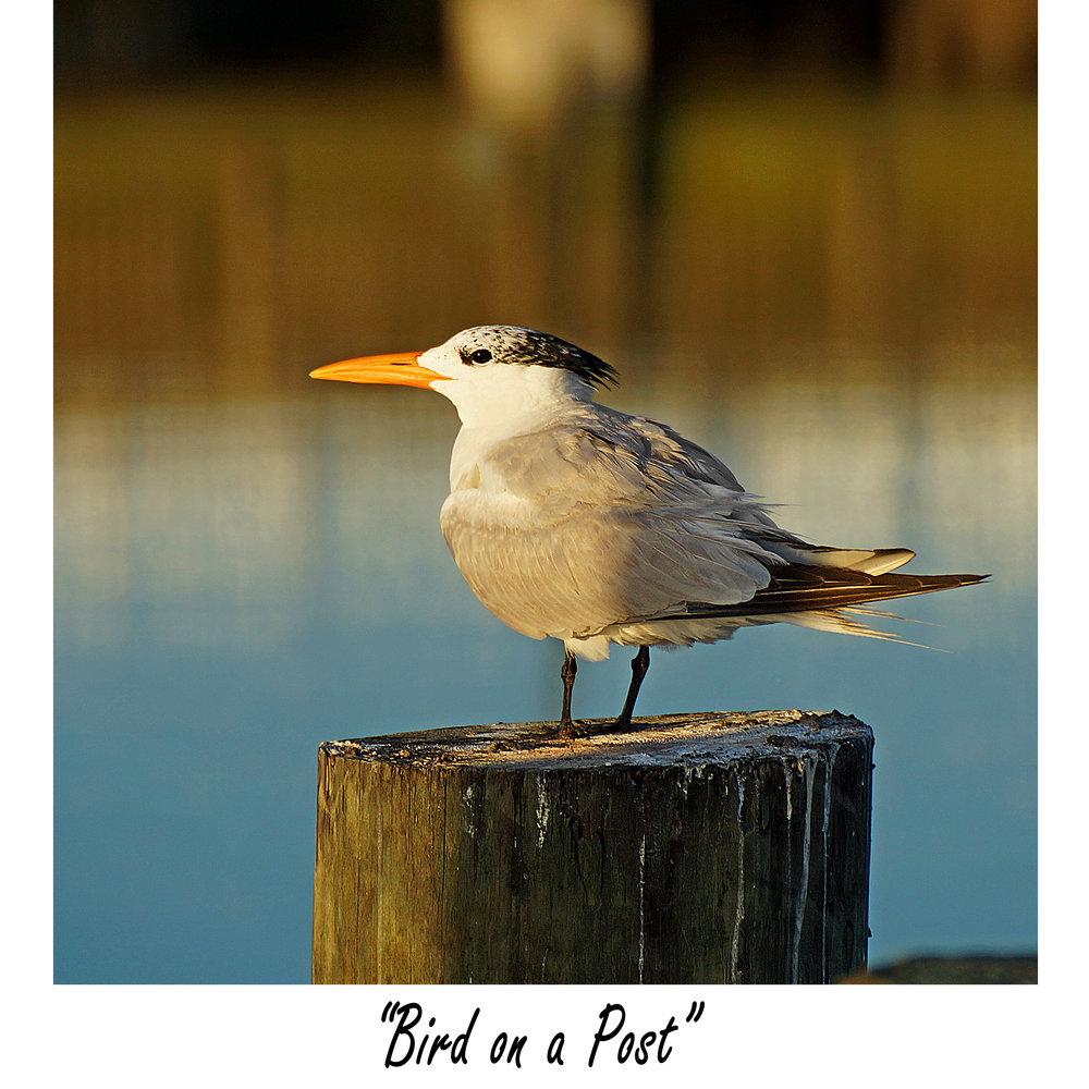 Bird on a Post.jpg