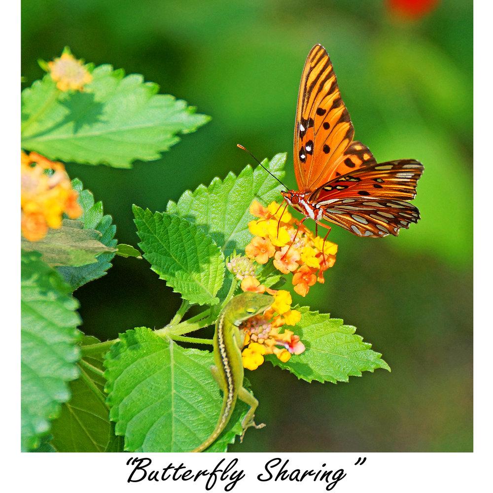 Butterfly Sharing.jpg