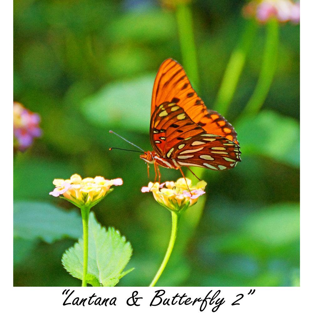 Lantana & Butterfly 2.jpg