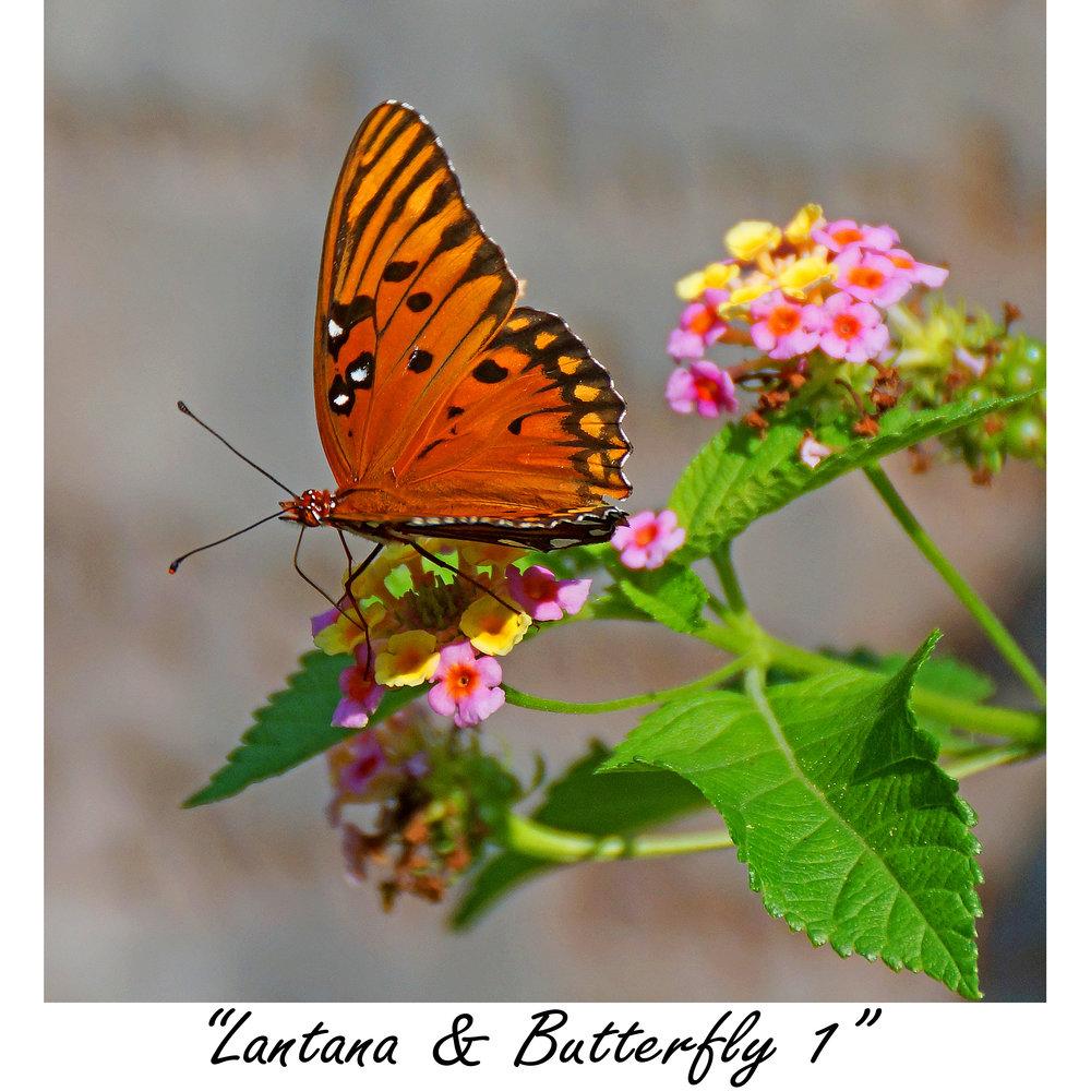 Lantana & Butterfly 1.jpg
