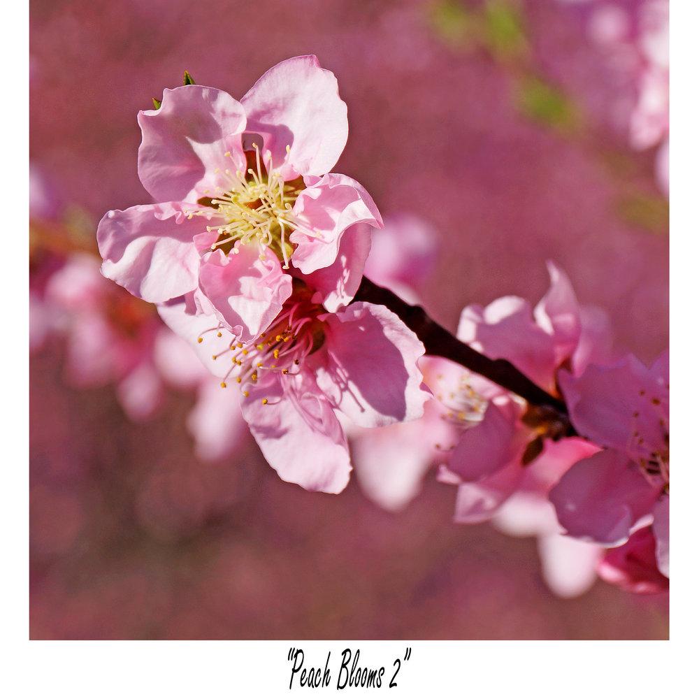 Peach Blooms 2.jpg