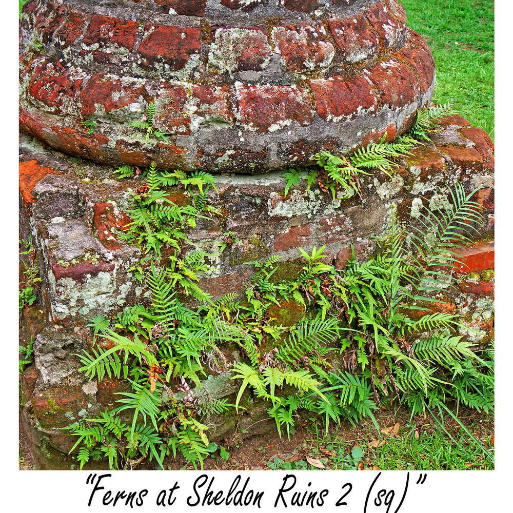 Ferns at Sheldon Ruins 2 (sq).jpg
