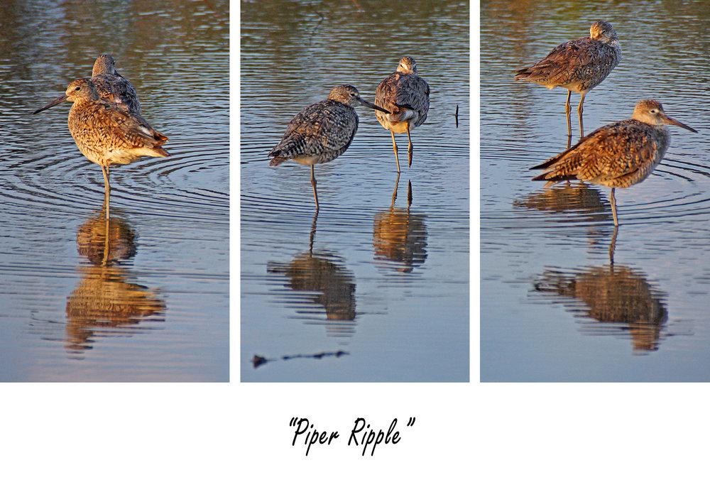 Piper Ripple.jpg