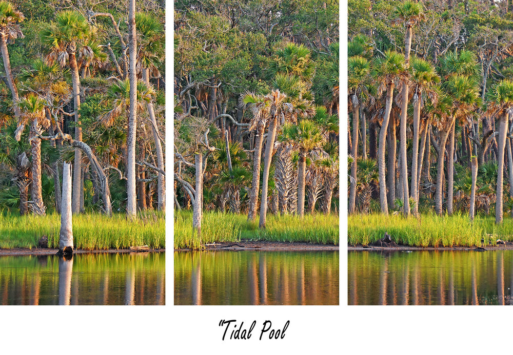 Tidal Pool.jpg