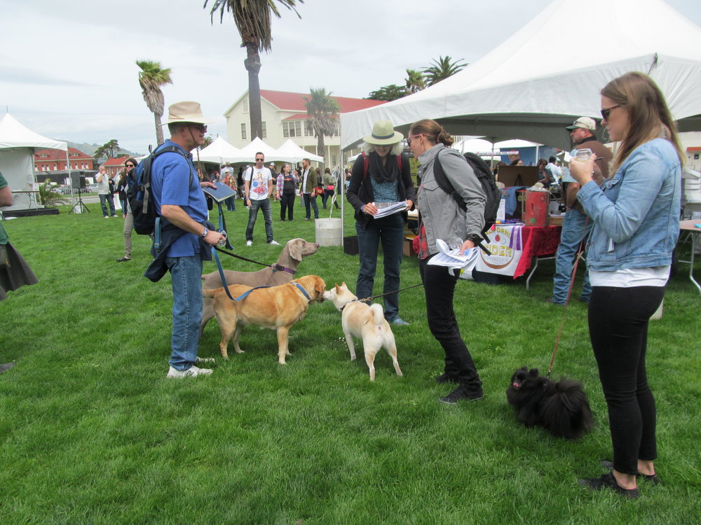 Dogs were definitely welcome at this event! The Summit even works with the  Berkeley Humane Society  to promote its Pints for Paws event in June.