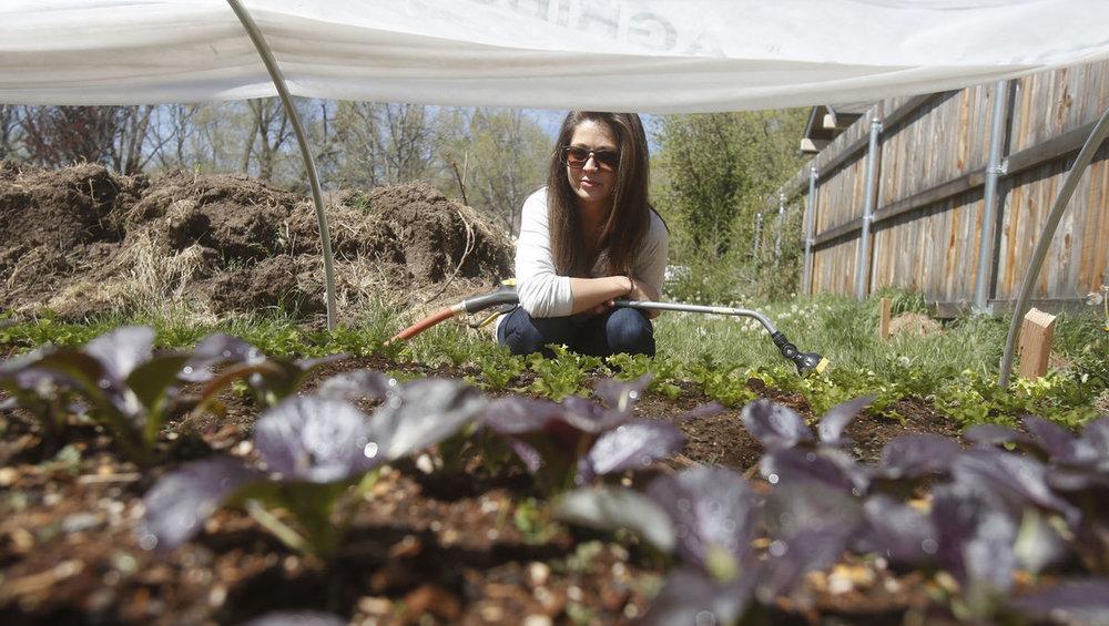 http://azdailysun.com/news/local/local-farmers-aim-to-get-their-food-into-more-hands/article_682345dd-0c82-59d9-8b0e-4f89a5abfc2b.html